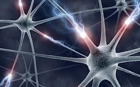 images  Neurology 3
