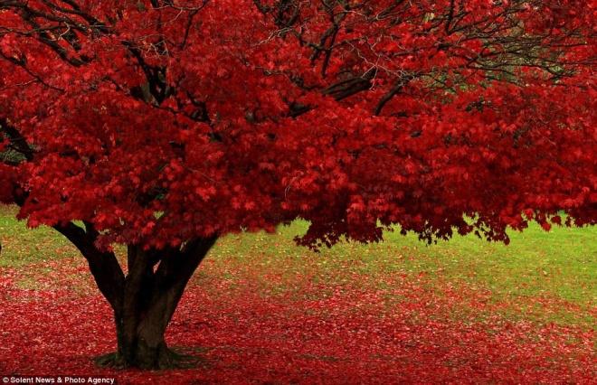 article-2058252-0EB1C64100000578-481_964x623  autumn in Britain